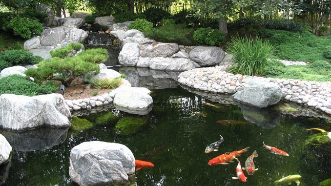 Een vijver brengt je tuin tot leven for Vissen vijver